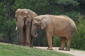 elephant adoption